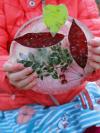 child's hands holding a DIY sun catcher