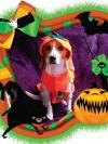 Maggie the Beagle in a pumpkin costume